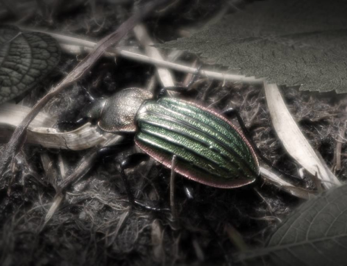 The Soul of an Insect.